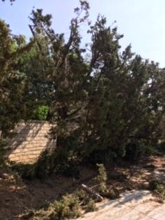木を切る人_e0350971_11265095.jpg