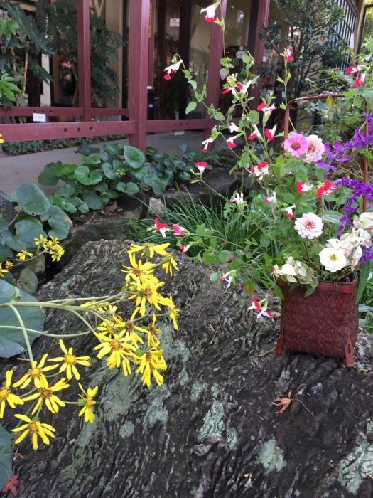 ㊗️秋空に 庭の花が輝いています💐             ふじみ野   御祝い席   一味亭_f0156675_12523944.jpeg