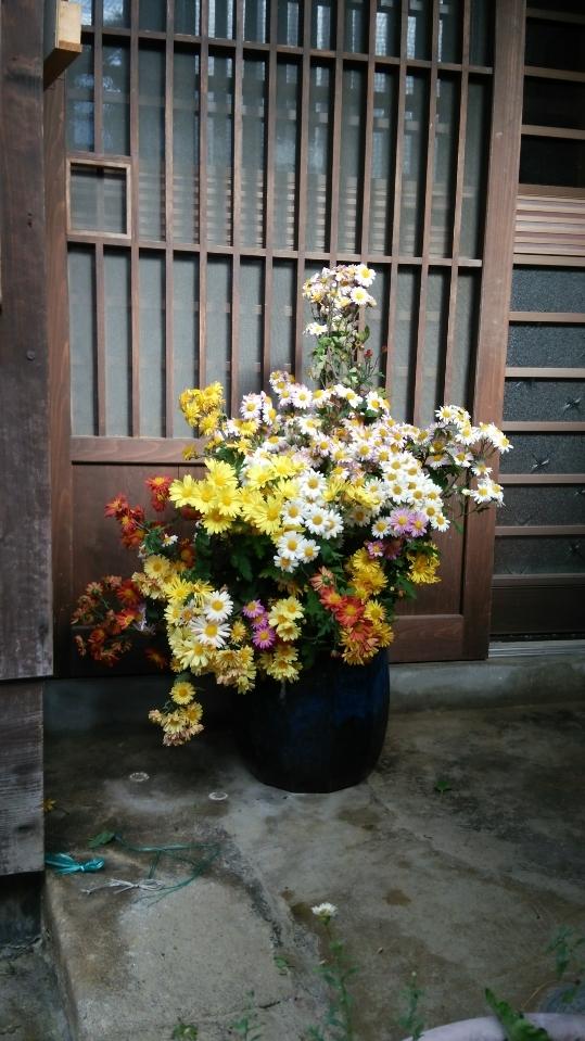 秋の花_c0224694_10415467.jpg