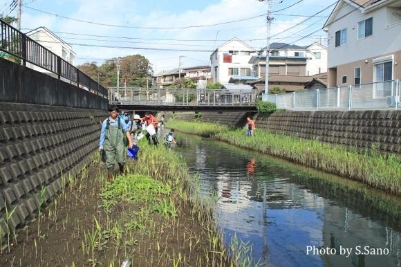 侍従川のクリーンアップ&調査(2018年10月)_b0348205_23593883.jpg