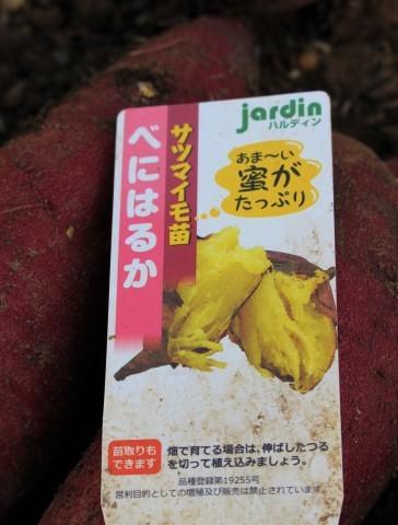 国バラで見たポタジェ&サツマイモ収穫♪_e0341606_00345460.jpg