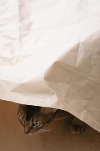 [猫的]潜伏中_e0090124_21565153.jpg