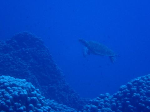 小笠原諸島への旅②_f0233340_16525277.jpg