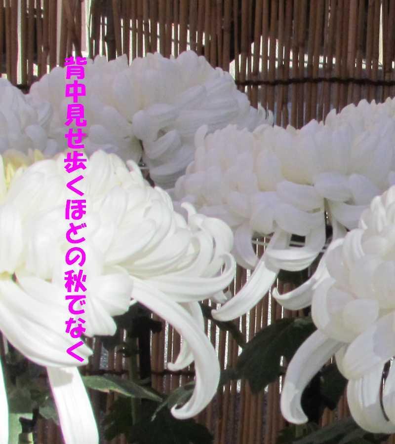 f0117041_05364992.jpg