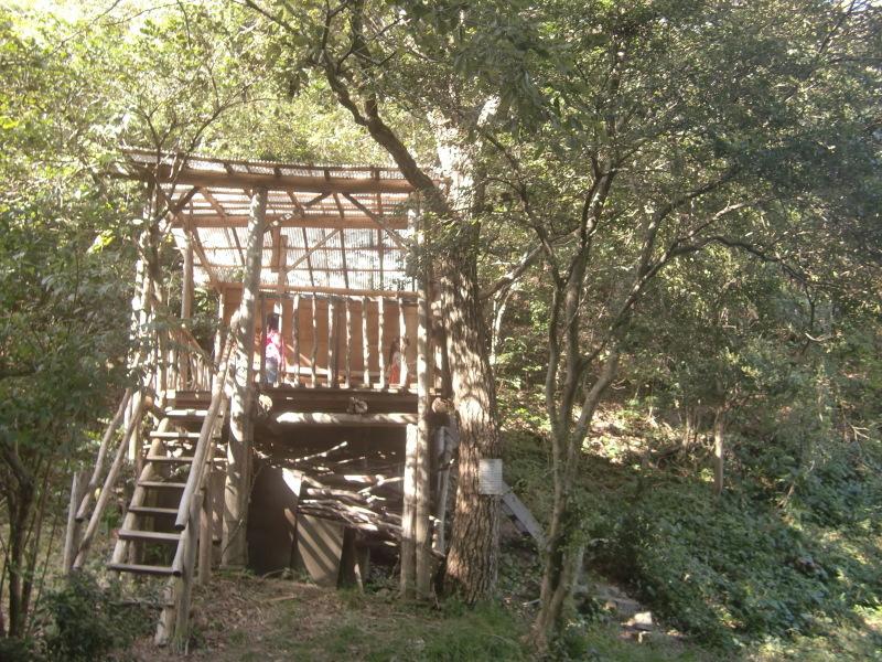 きのくに子どもNPO「秋の里山で遊ぼう!ハイキング!」・・・孝子の森_c0108460_19372110.jpg