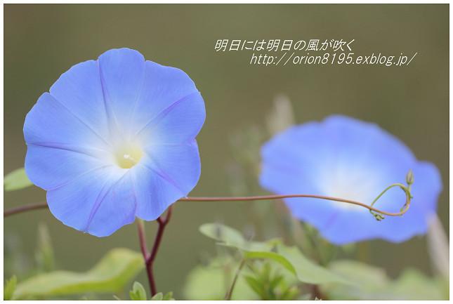 f0361079_14162743.jpg
