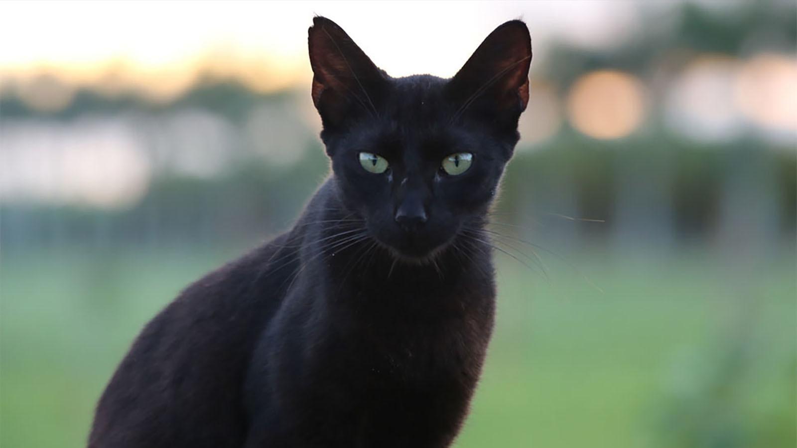 """猫が大暴れ """"Destroy Everything"""" のパロディMVが公開_b0233987_21100948.jpg"""
