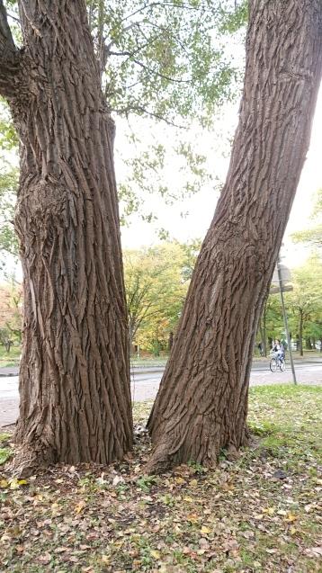 北海道最終日_e0167593_23472370.jpg