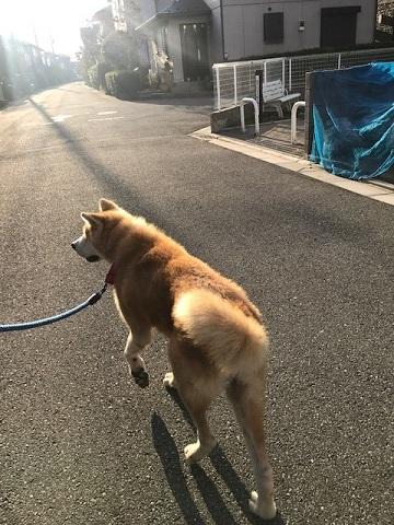 秋田犬「将吉」くん、超カワイイ♪_f0242002_13242304.jpg