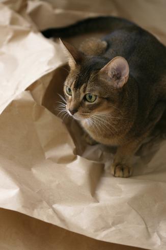 [猫的]オン_e0090124_23422903.jpg