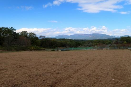 葡萄園の草刈り_d0336530_21324009.jpg