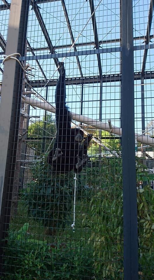 東山動植物園を散策♪_f0373339_13411412.jpg
