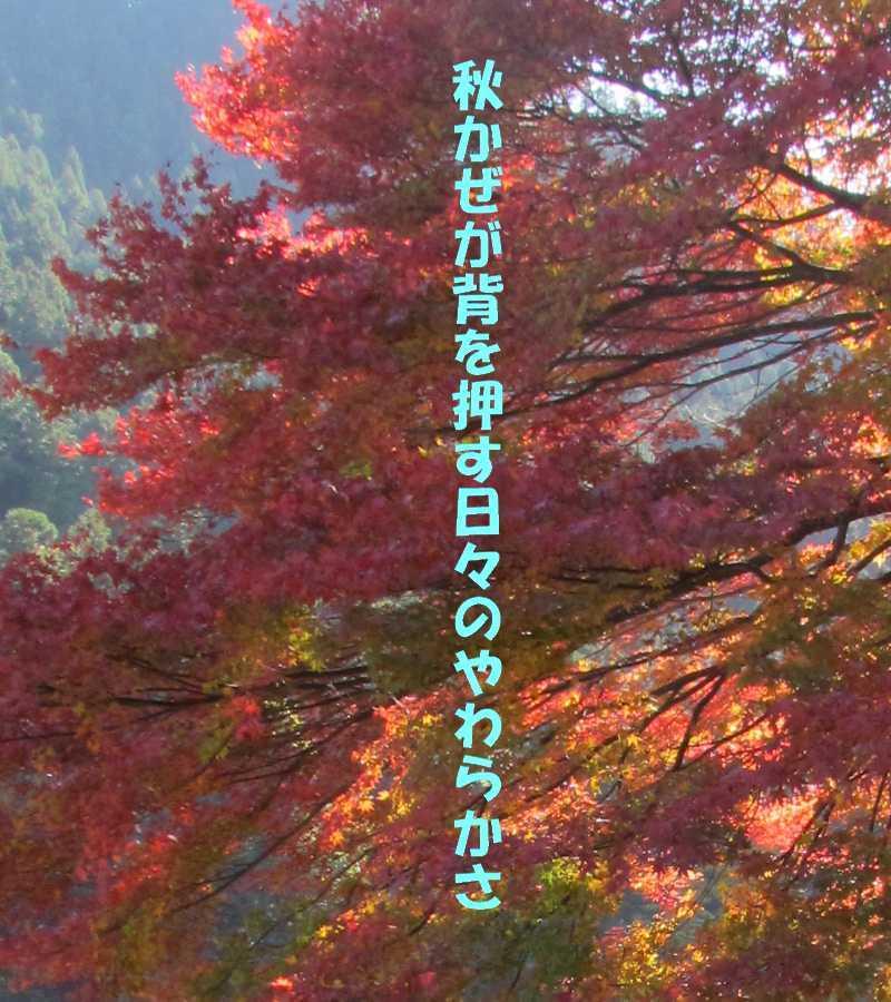 f0117041_05534313.jpg