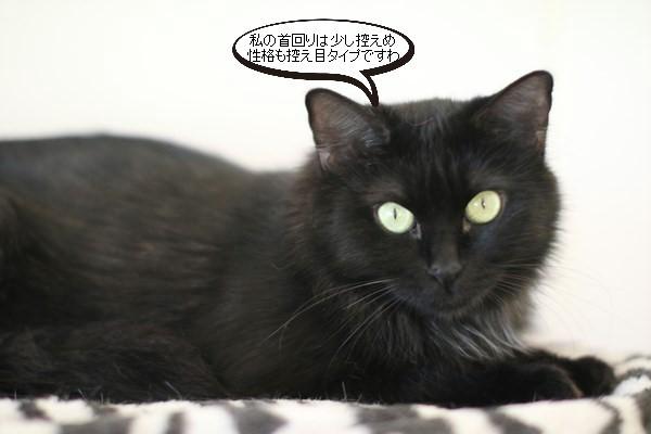 黒猫さんコンビは仲良しです_e0151545_19013256.jpg