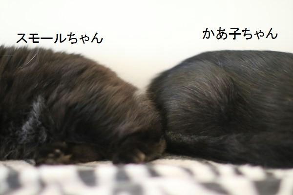 黒猫さんコンビは仲良しです_e0151545_19015093.jpg