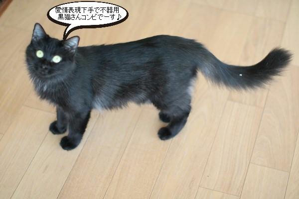 黒猫さんコンビは仲良しです_e0151545_19020176.jpg