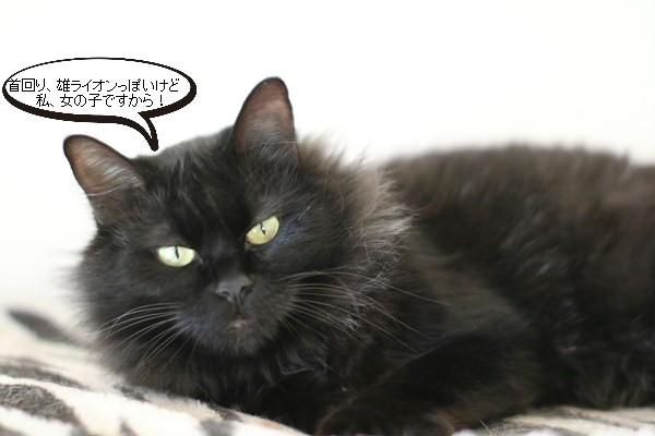 黒猫さんコンビは仲良しです_e0151545_19024322.jpg