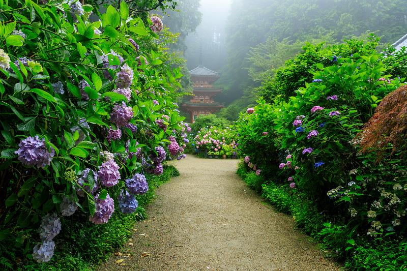 雨靄と紫陽花の彩り(岩船寺)_f0155048_21535837.jpg