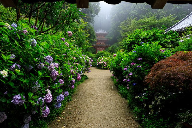 雨靄と紫陽花の彩り(岩船寺)_f0155048_21542582.jpg