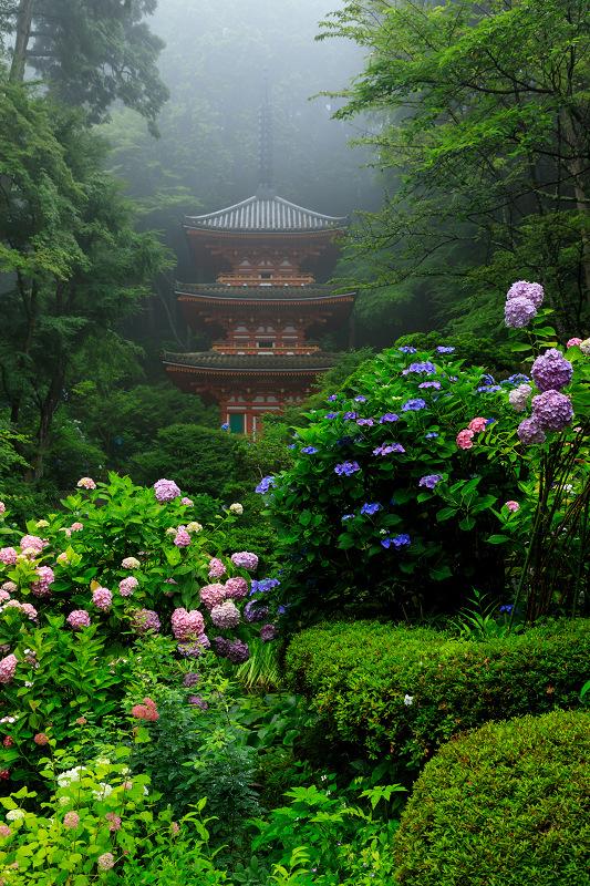 雨靄と紫陽花の彩り(岩船寺)_f0155048_21543698.jpg