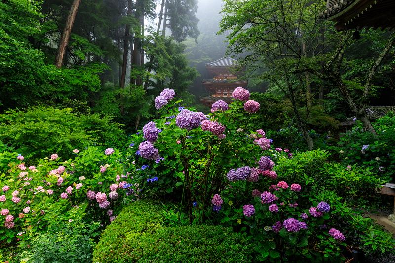 雨靄と紫陽花の彩り(岩船寺)_f0155048_2155062.jpg