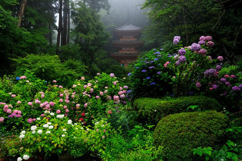 雨靄と紫陽花の彩り(岩船寺)_f0155048_21552580.jpg