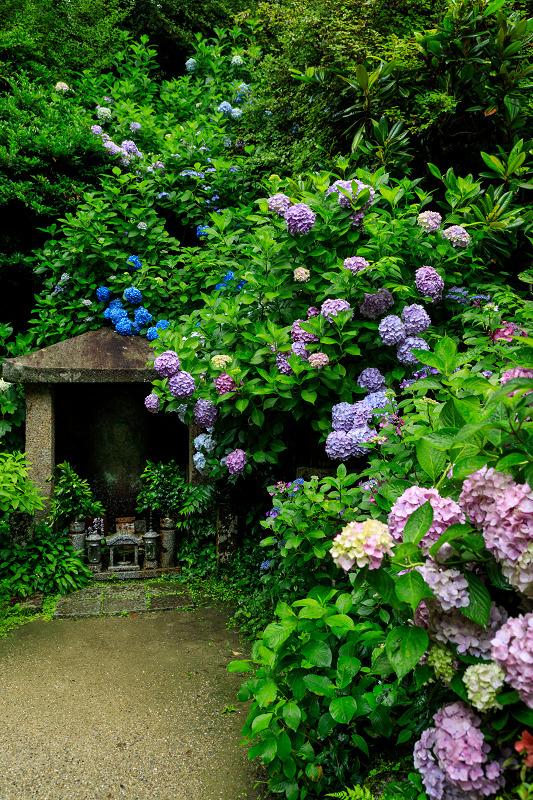 雨靄と紫陽花の彩り(岩船寺)_f0155048_21562785.jpg