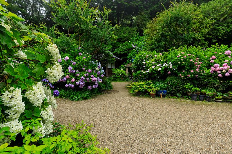 雨靄と紫陽花の彩り(岩船寺)_f0155048_2156547.jpg