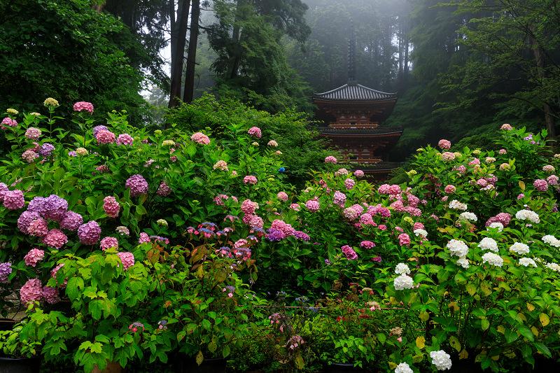 雨靄と紫陽花の彩り(岩船寺)_f0155048_21565872.jpg