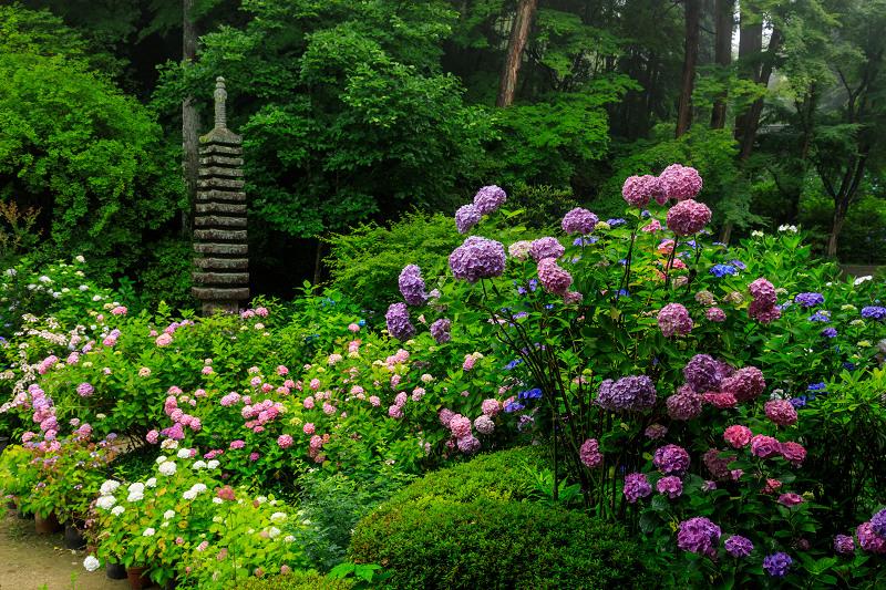 雨靄と紫陽花の彩り(岩船寺)_f0155048_21573340.jpg