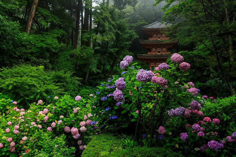 雨靄と紫陽花の彩り(岩船寺)_f0155048_2158036.jpg