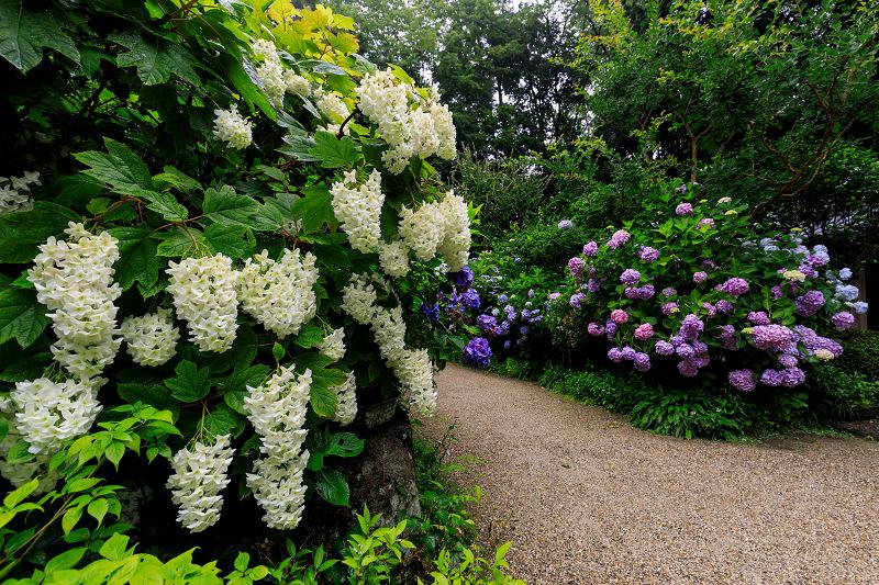 雨靄と紫陽花の彩り(岩船寺)_f0155048_21591911.jpg