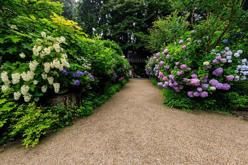 雨靄と紫陽花の彩り(岩船寺)_f0155048_220324.jpg