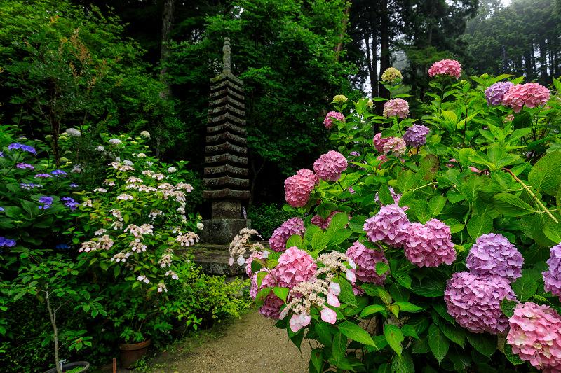 雨靄と紫陽花の彩り(岩船寺)_f0155048_22103334.jpg