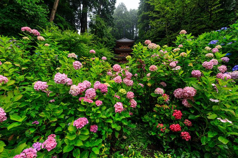 雨靄と紫陽花の彩り(岩船寺)_f0155048_2215177.jpg
