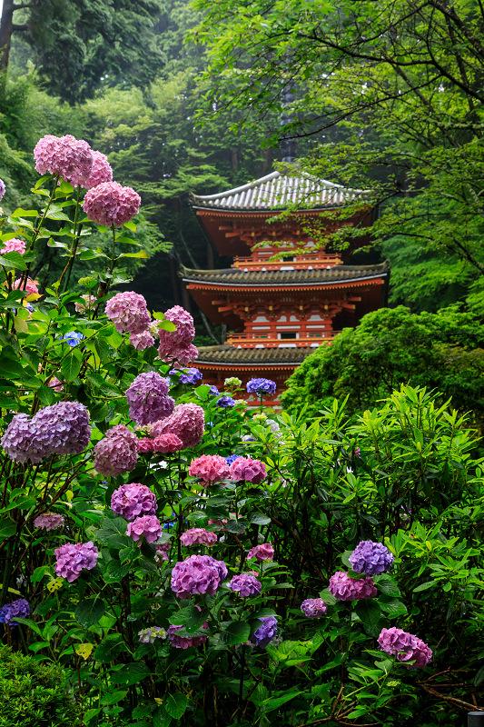 雨靄と紫陽花の彩り(岩船寺)_f0155048_22155169.jpg