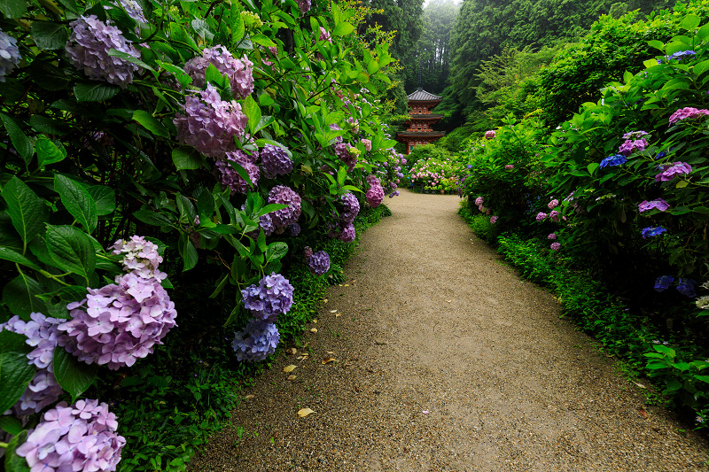 雨靄と紫陽花の彩り(岩船寺)_f0155048_221834.jpg