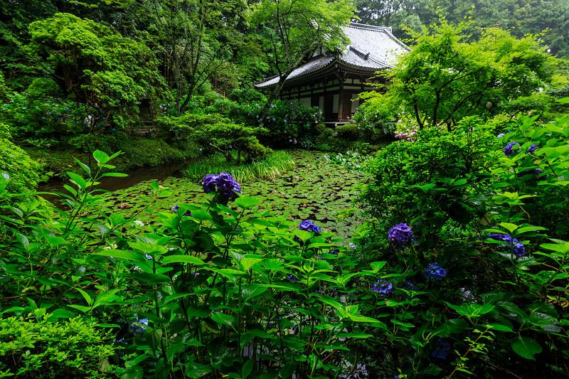 雨靄と紫陽花の彩り(岩船寺)_f0155048_2224852.jpg