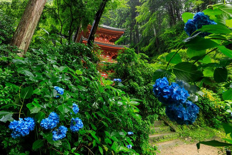 雨靄と紫陽花の彩り(岩船寺)_f0155048_22384.jpg