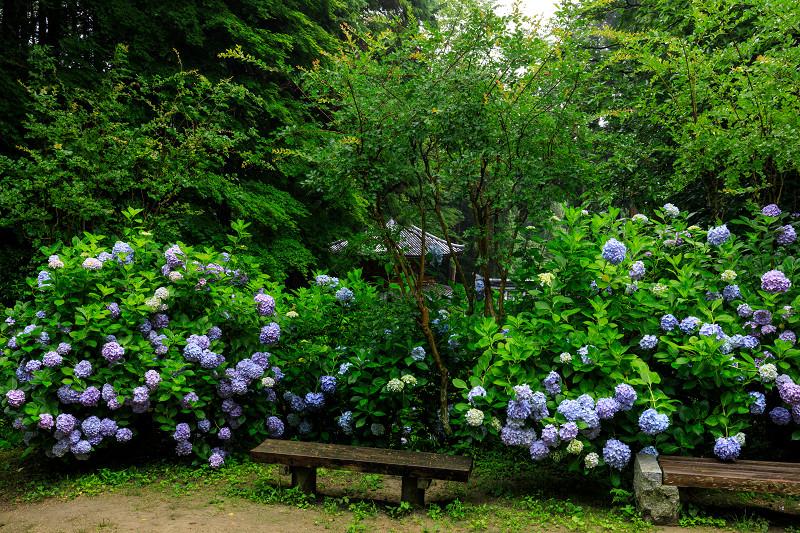 雨靄と紫陽花の彩り(岩船寺)_f0155048_225561.jpg