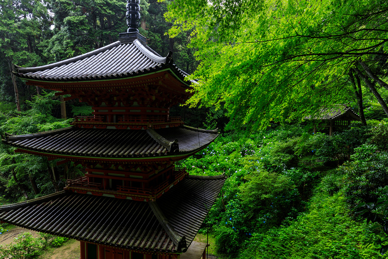 雨靄と紫陽花の彩り(岩船寺)_f0155048_2264475.jpg