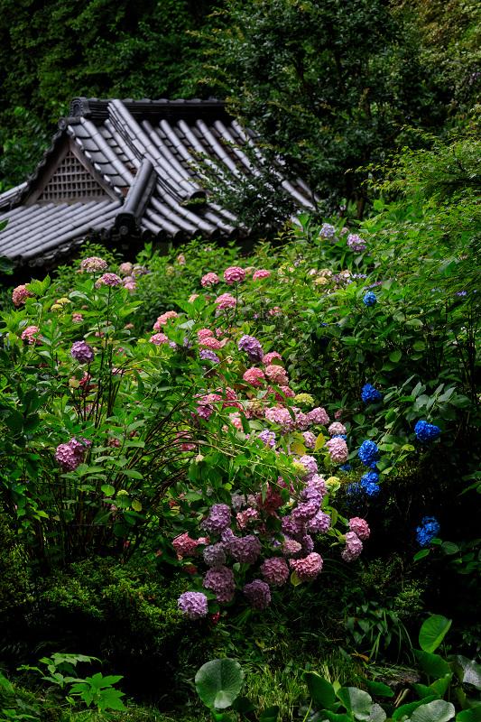 雨靄と紫陽花の彩り(岩船寺)_f0155048_2271518.jpg