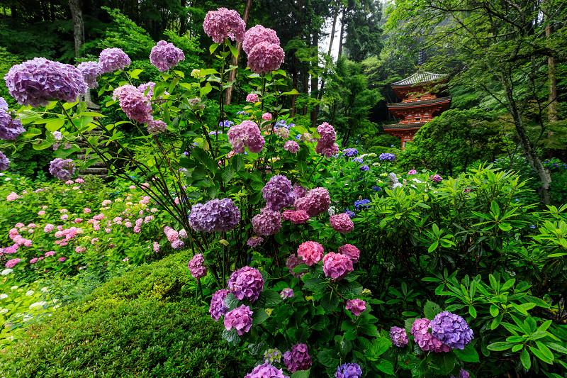 雨靄と紫陽花の彩り(岩船寺)_f0155048_2273247.jpg