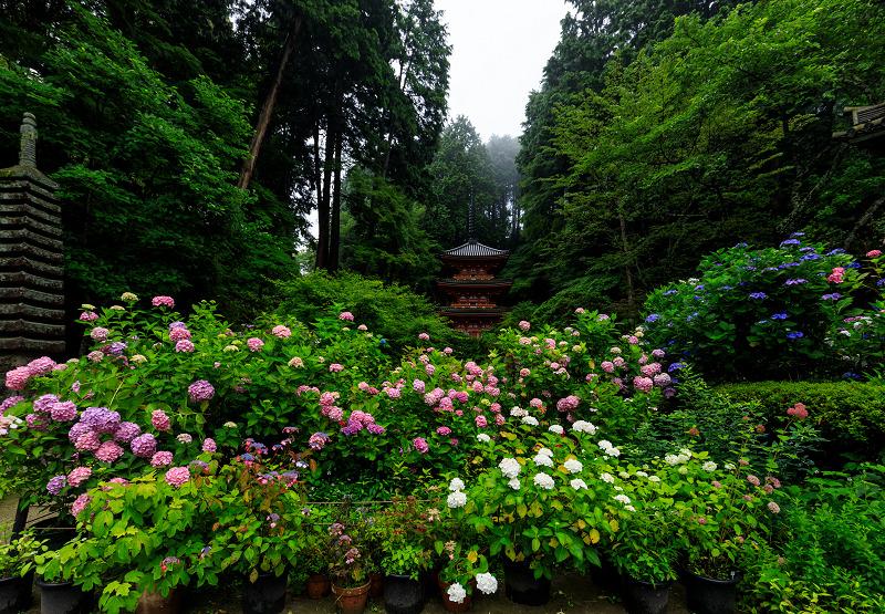 雨靄と紫陽花の彩り(岩船寺)_f0155048_2275510.jpg