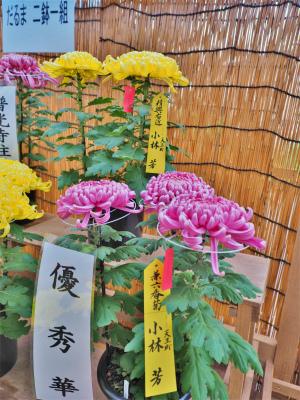 明日から「魚沼菊花展・浦佐菊まつり」が始まります_c0336902_21590072.jpg