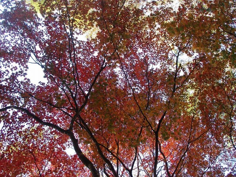 10月29日(月)・・・今月のお休みの日に_f0202703_00030790.jpg