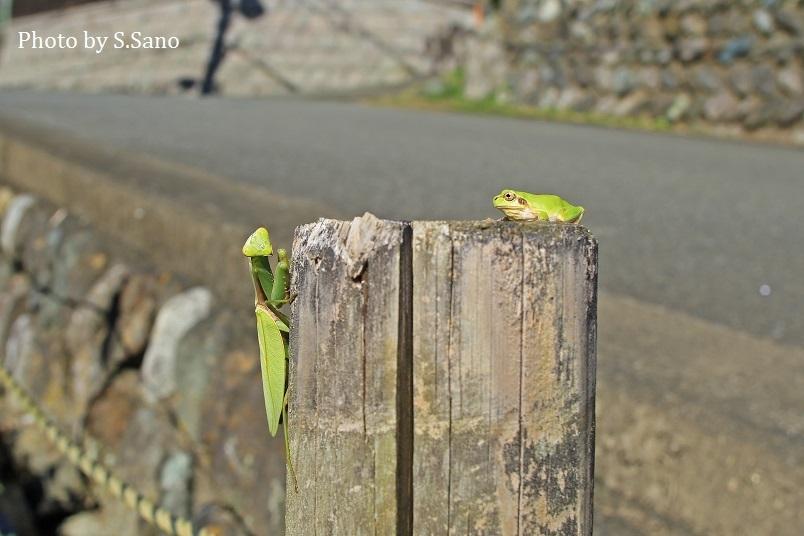神奈川県西部の里山(2018年10月)_b0348205_23565205.jpg