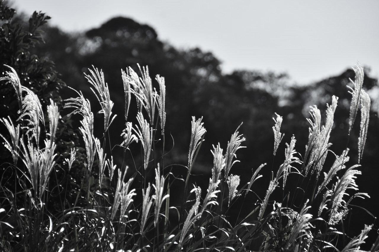 秋の匂いはするけれど 公園墓地散歩_d0065116_19500450.jpg