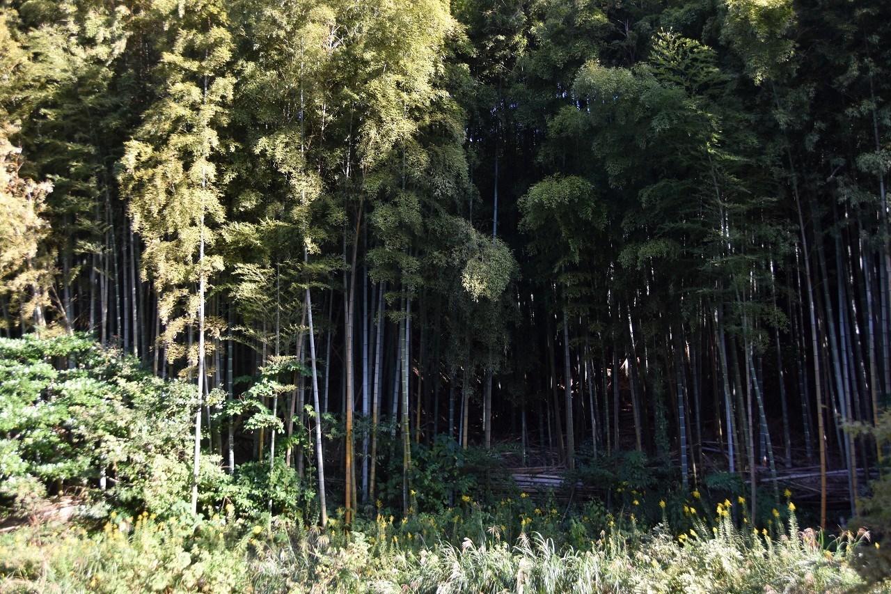 秋の匂いはするけれど 公園墓地散歩_d0065116_19521012.jpg
