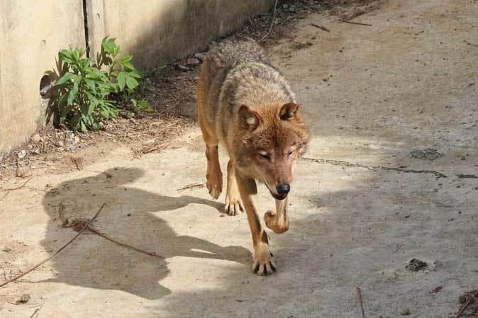 4月のオオカミたち~ロイ&チロ_b0355317_21583517.jpg